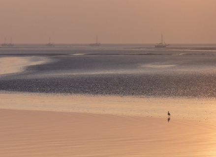 themadag-waddenzee20141010